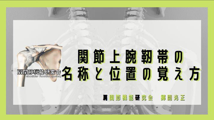 関節上腕靭帯の名称と位置の覚え方