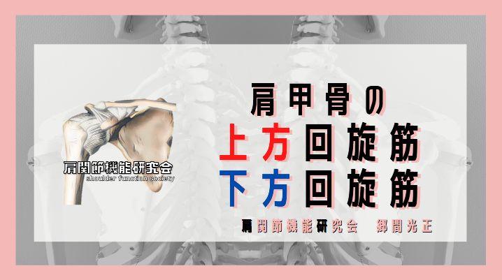 肩甲骨の上方回旋筋と下方回旋筋