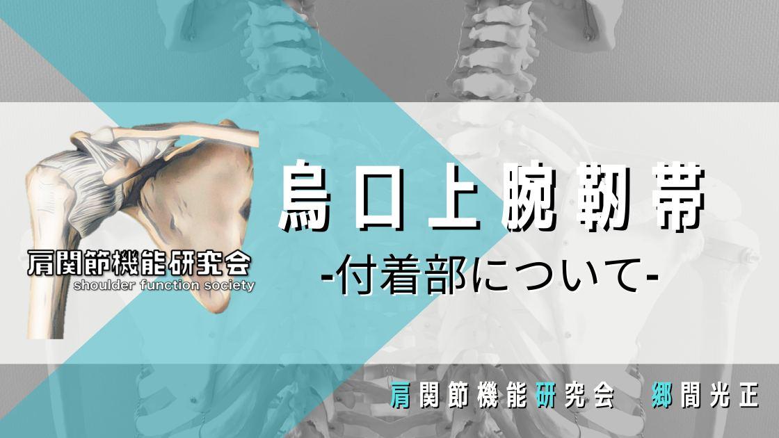 組織学的な烏口上腕靭帯の付着部