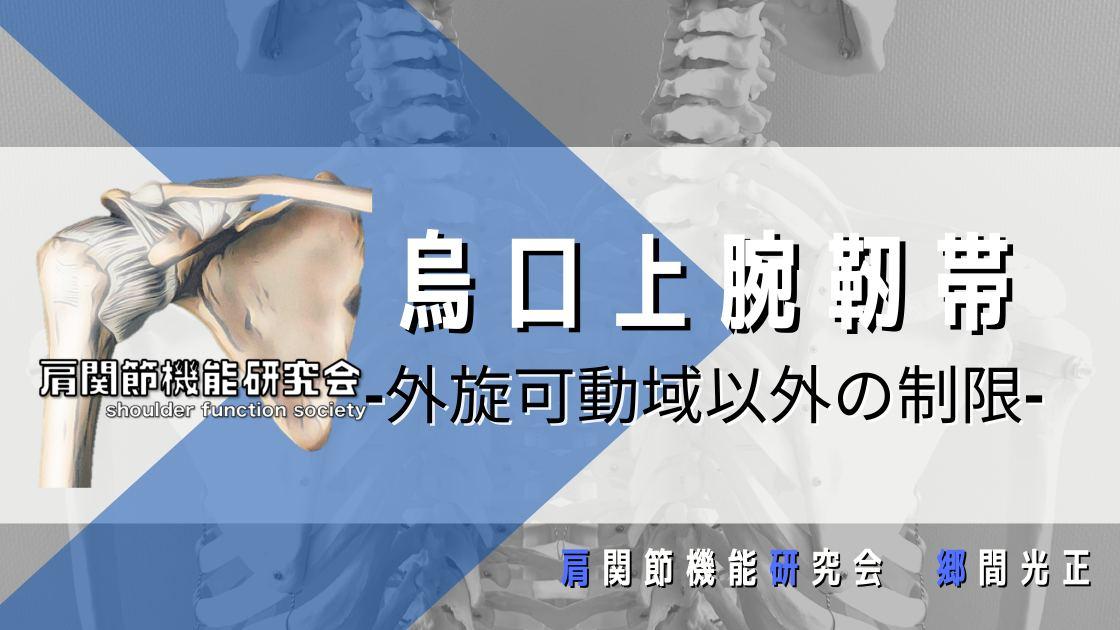 烏口上腕靭帯は外旋以外の制限にも関与する