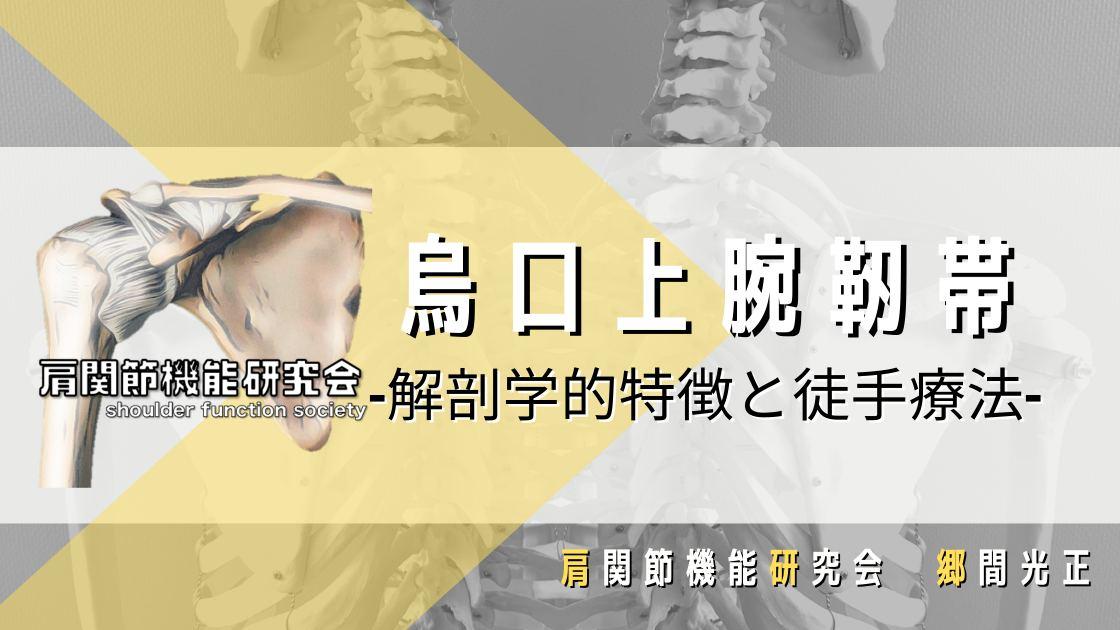 烏口上腕靭帯の解剖学的特徴と徒手療法