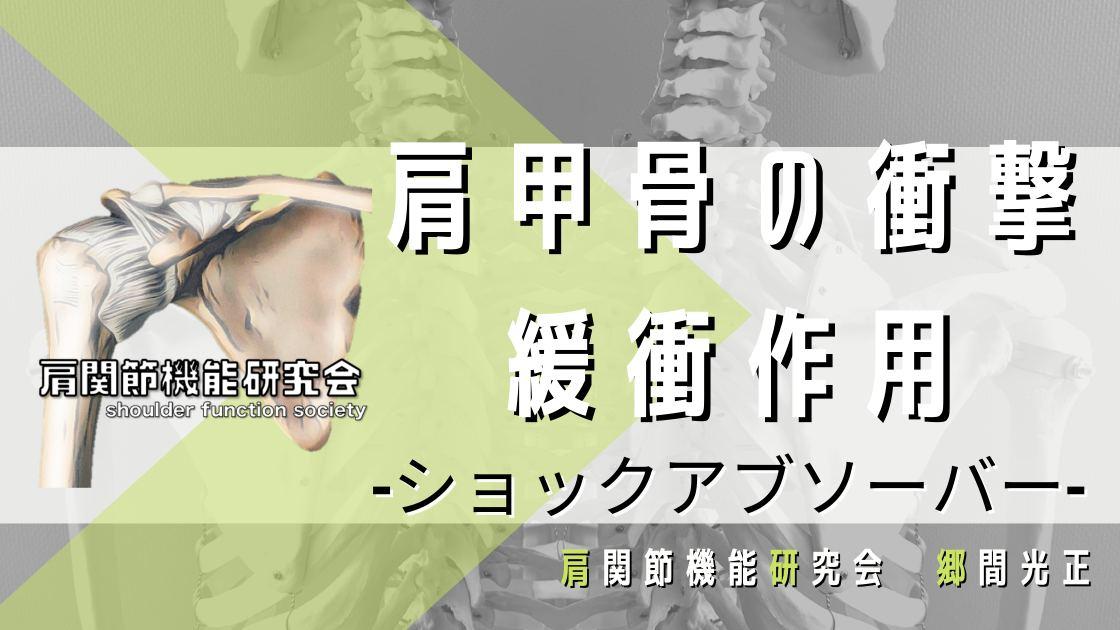 肩甲骨の衝撃緩衝作用。ショックアブソーバーとは?