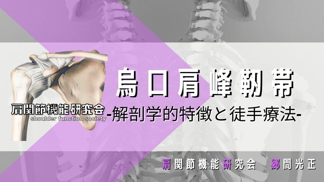 烏口肩峰靭帯の解剖学的特徴