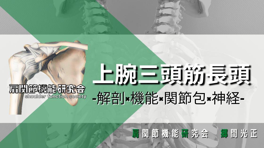 上腕三頭筋長頭の解剖学的特徴