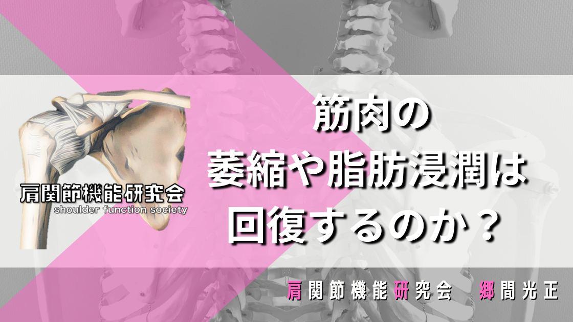 筋肉の萎縮や脂肪浸潤は回復するのか?