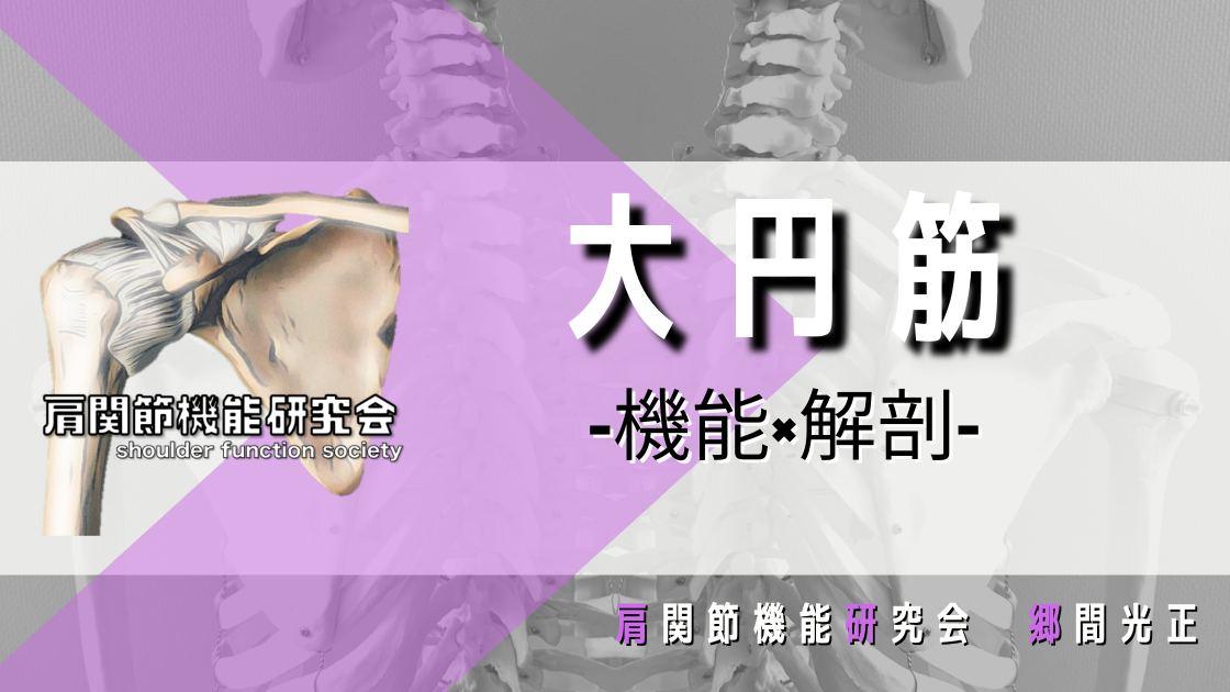 大円筋の解剖学的特徴