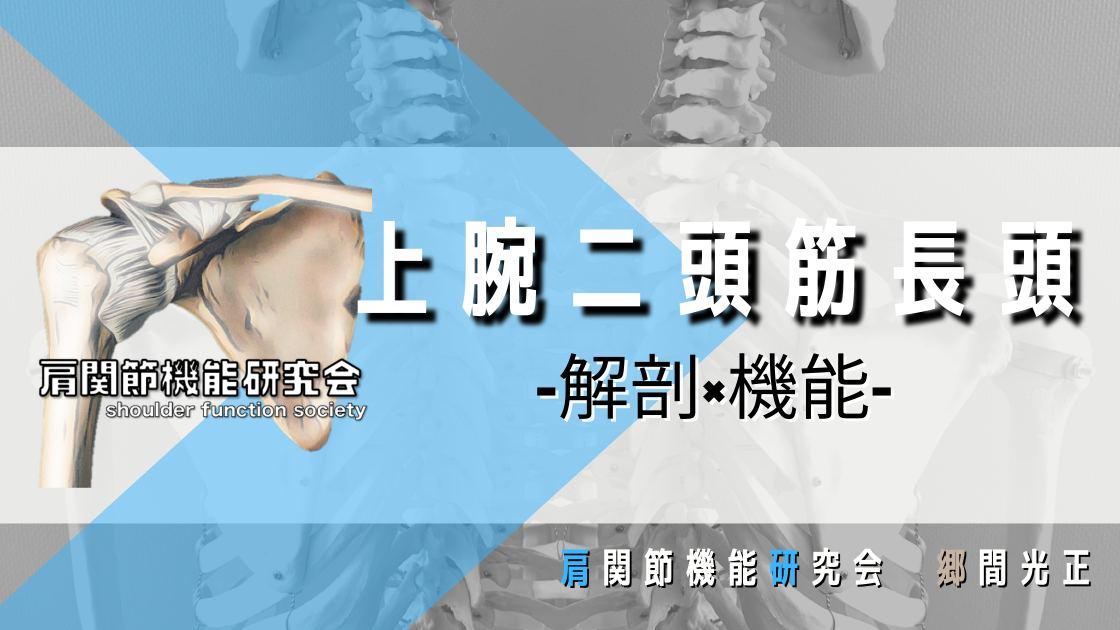 上腕二頭筋長頭の解剖学的特徴