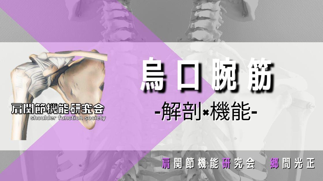 烏口腕筋の解剖学的特徴