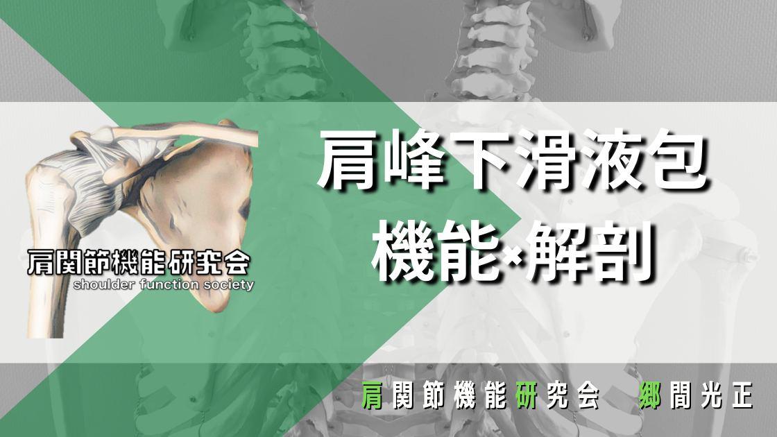 臨床に繋げる-肩峰下滑液包の機能解剖-